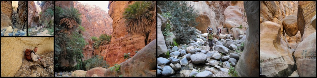 Discover the oasis in Wadi Ghuweir near Dana village and Feynan